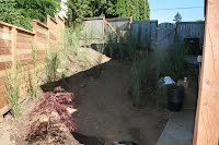 landscape plants, tall grasses, shrubs